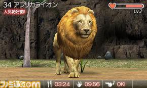 animal04
