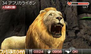animal06