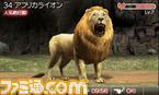 animal05
